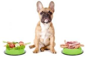 people food dog gas