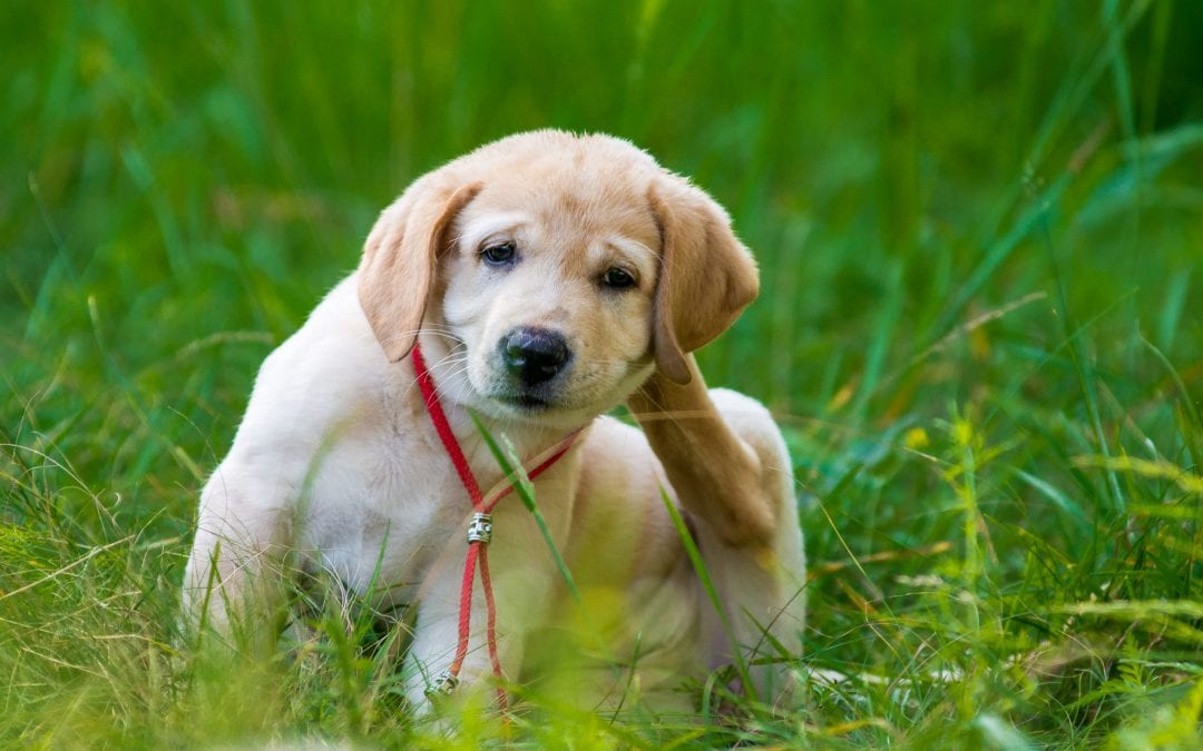 Help! How Can I Safely Give My Dog Allergy Relief?