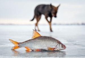 Omega-3 Dog Supplements