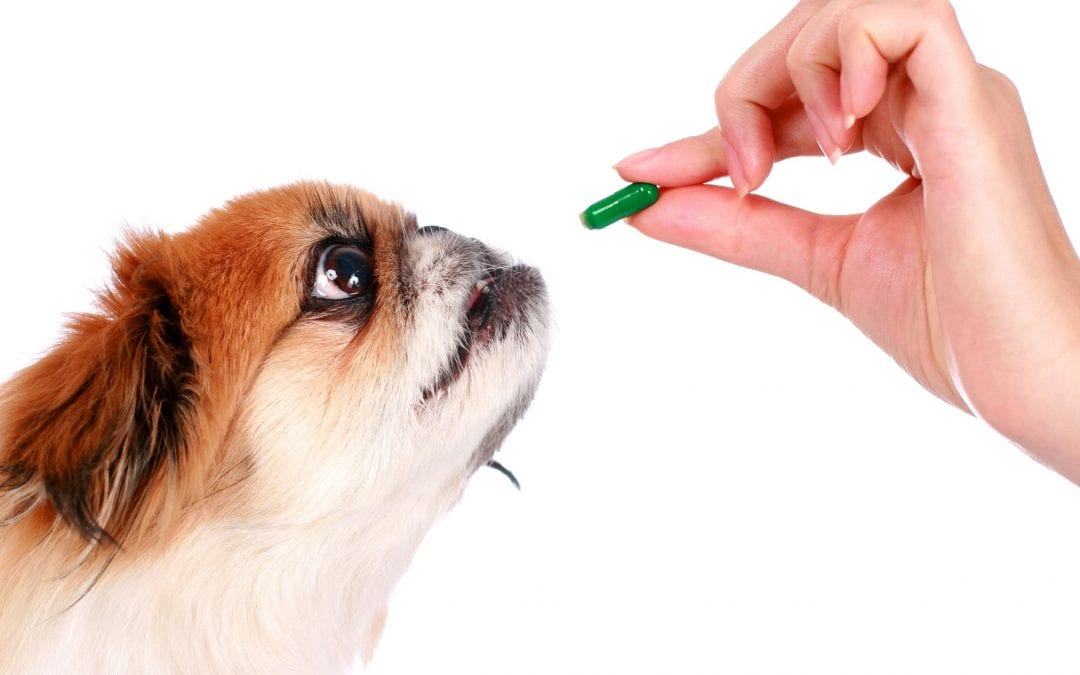 Can I Give My Dog Human Vitamins?