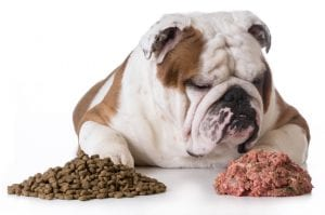 Mucus In Your Dog's Poop | Ultimate Pet Nutrition