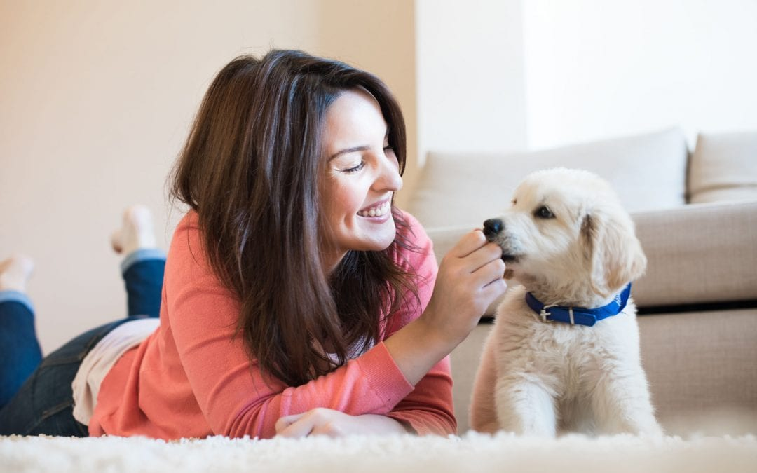 How to Care for a Dog for First Time Pet Owners