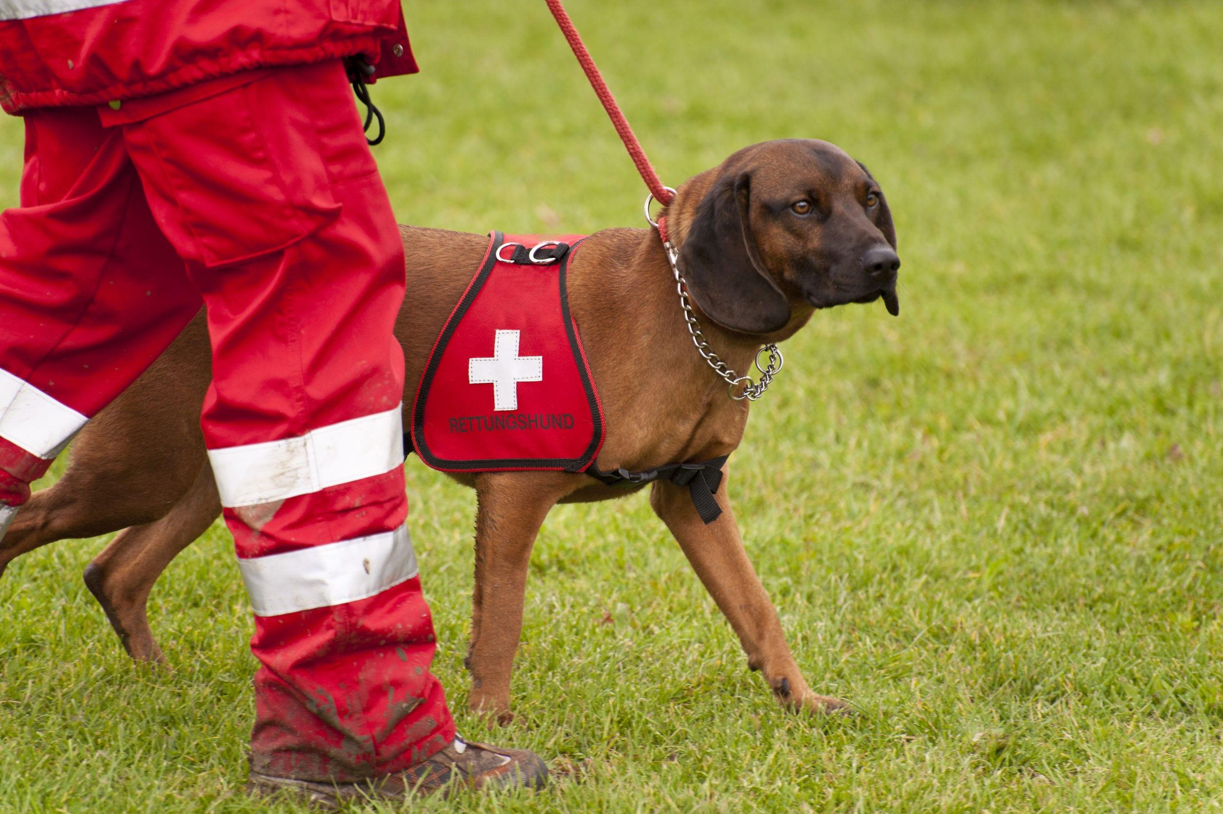 Service Dogs | Ultimate Pet Nutrition