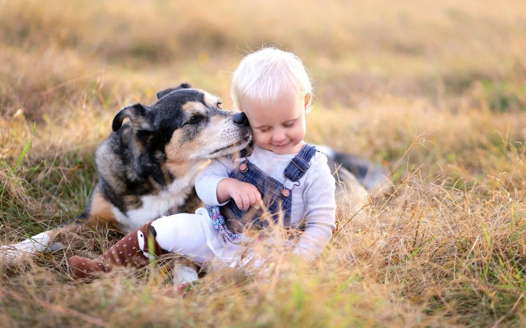Best Family Dogs for Kids: 8 Breeds You Don't Want to Miss