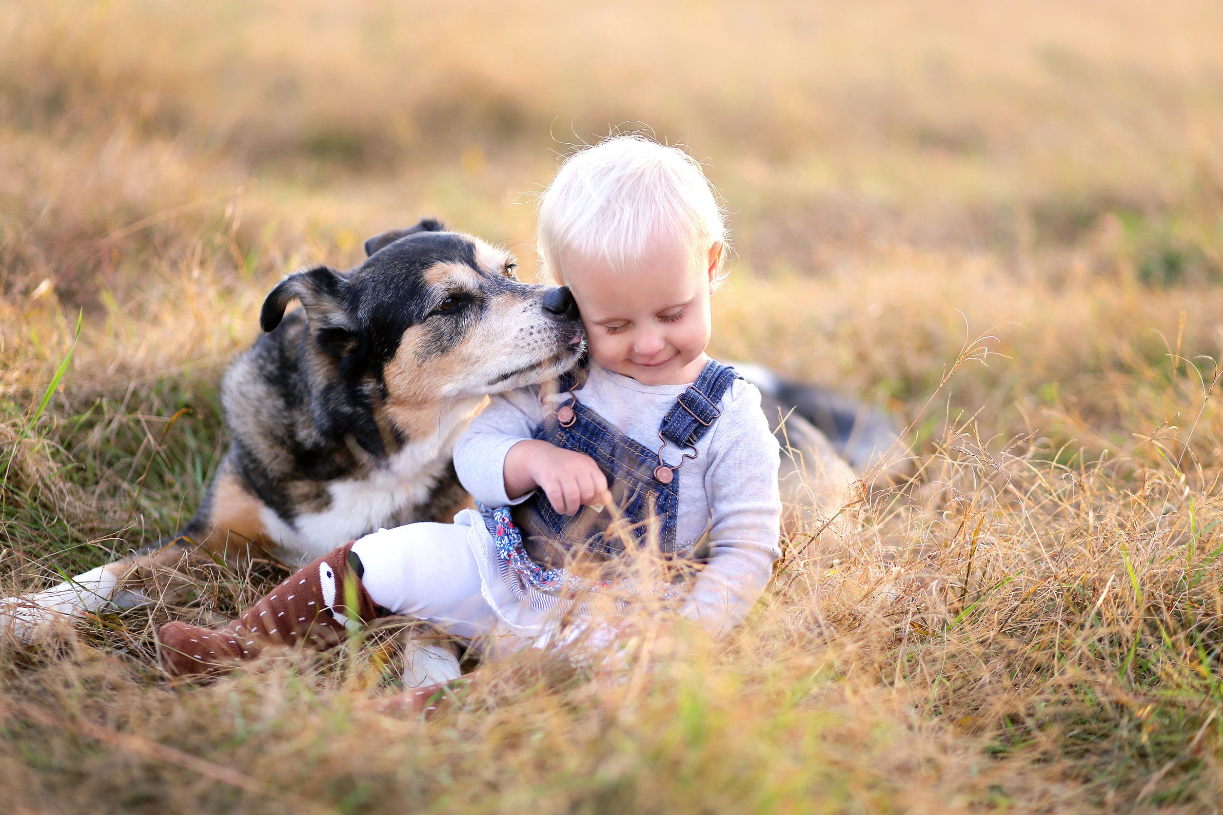 Best Family Dogs | Ultimate Pet Nutrition