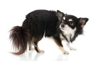 Shelter Dogs | Ultimate Pet Nutrition