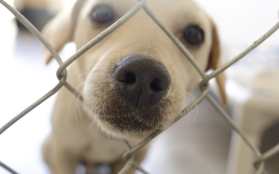 Behavioral Problems in Shelter Dogs (a truth you need to know)