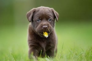 Dogs Eat Grass | Ultimate Pet Nutrition