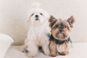 Getting a Dog | Ultimate Pet Nutrition