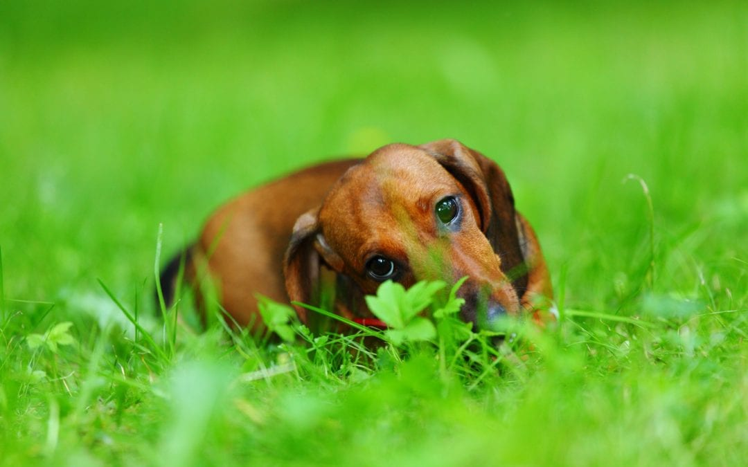 Paw Chewing: What Does This Strange Dog Behavior Mean?