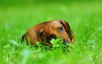 Dog Chewing Paws | Ultimate Pet Nutrition
