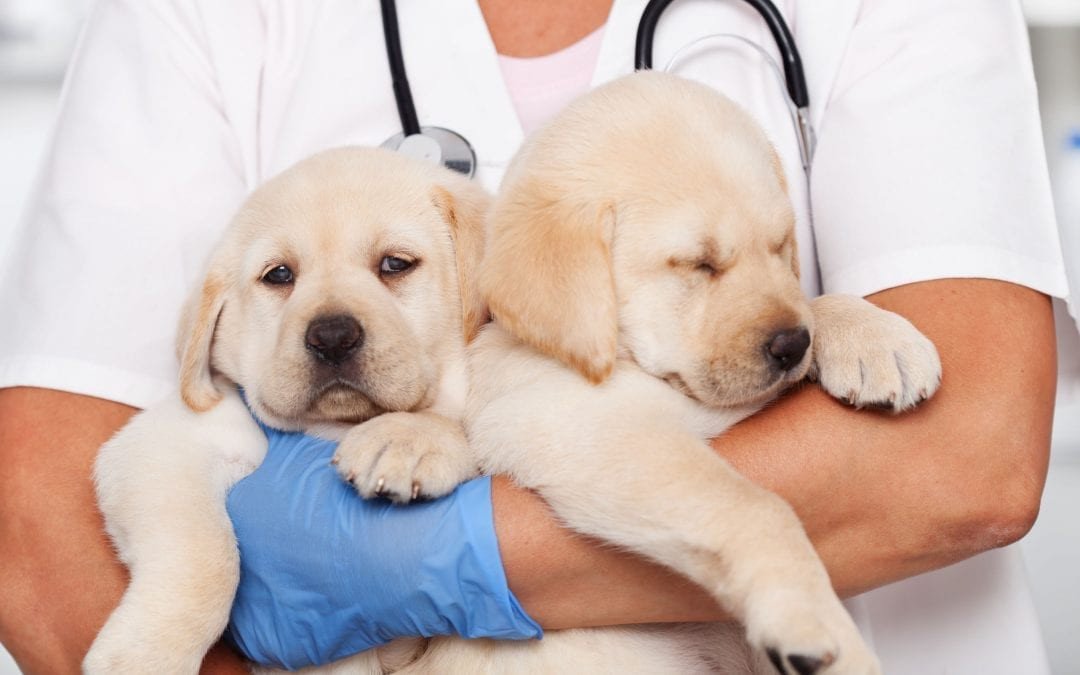 Puppy Vaccinations: Everything to Know For the First Year