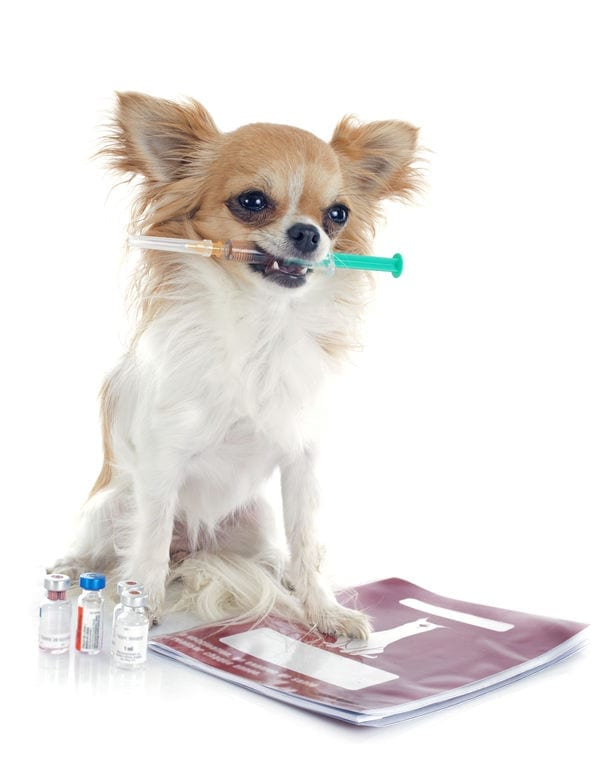 Vaccinations | Ultimate Pet Nutrition