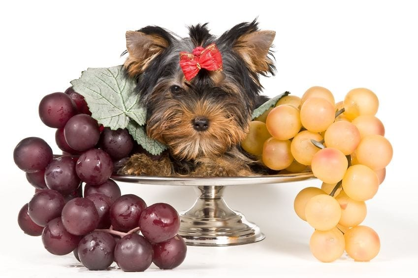Can Dogs Eat Grapes | Ultimate Pet Nutrition