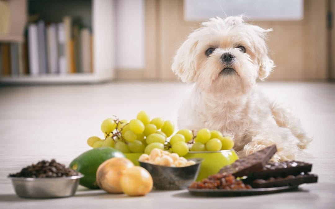 Can Dogs Eat Grapes? The Answer is Truly Life-Saving