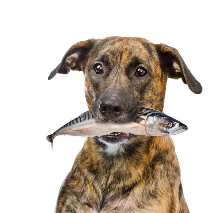 Fish Oil For Dogs | Ultimate Pet Nutrition