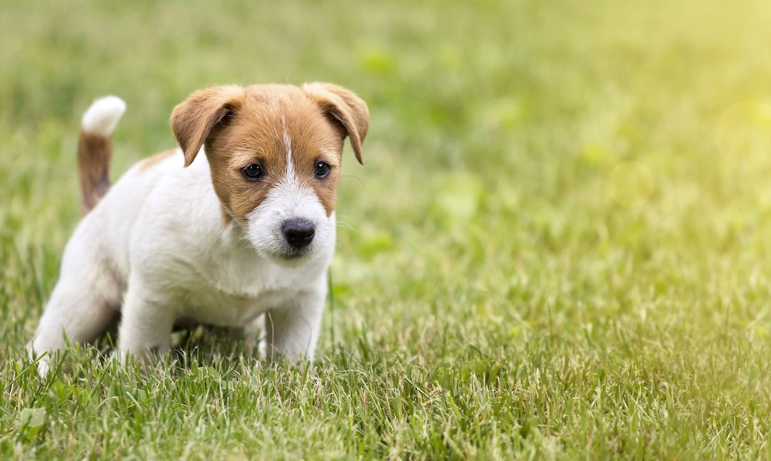 Everything You Need to Know About Worms in Dog Poop