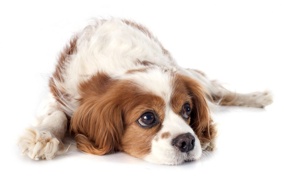 Why Do Dogs Sigh? (these reasons might surprise you!)