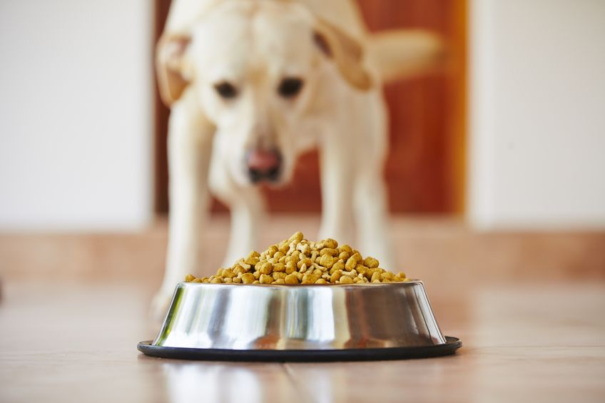 Dog Stomach Ache | Ultimate Pet Nutrition