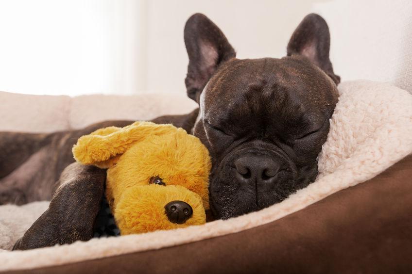 Dog Stomach Ache   Ultimate Pet Nutrition