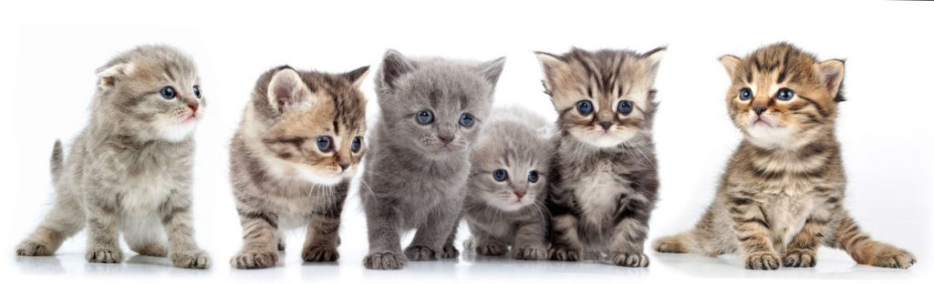 Fostering a Cat   Ultimate Pet Nutrition
