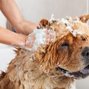 home remedies for itchy dogs | Ultimate Pet Nutrition