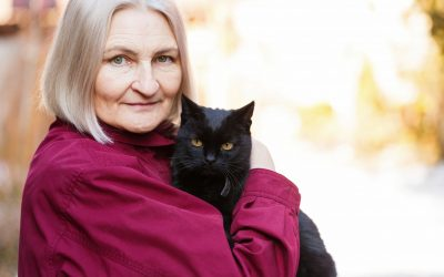 Fostering a Cat | Ultimate Pet Nutrition
