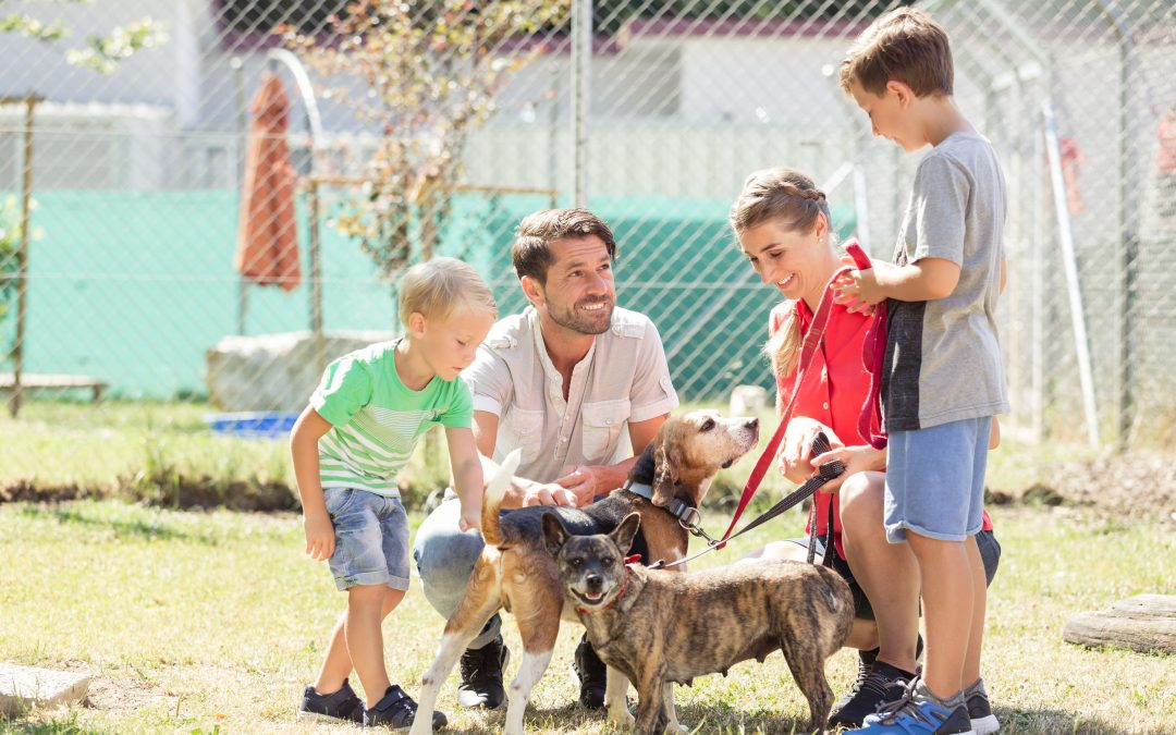 Fostering a Dog – What It Entails and Is It Right For You?