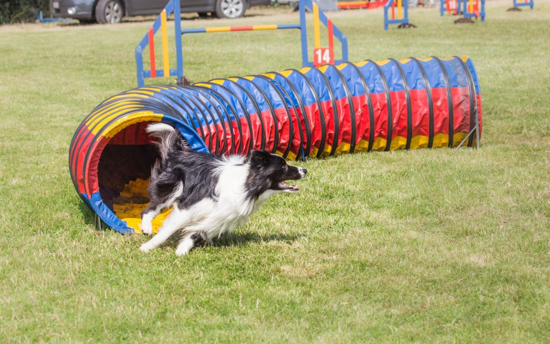 Best Dog Sports for Active Dogs
