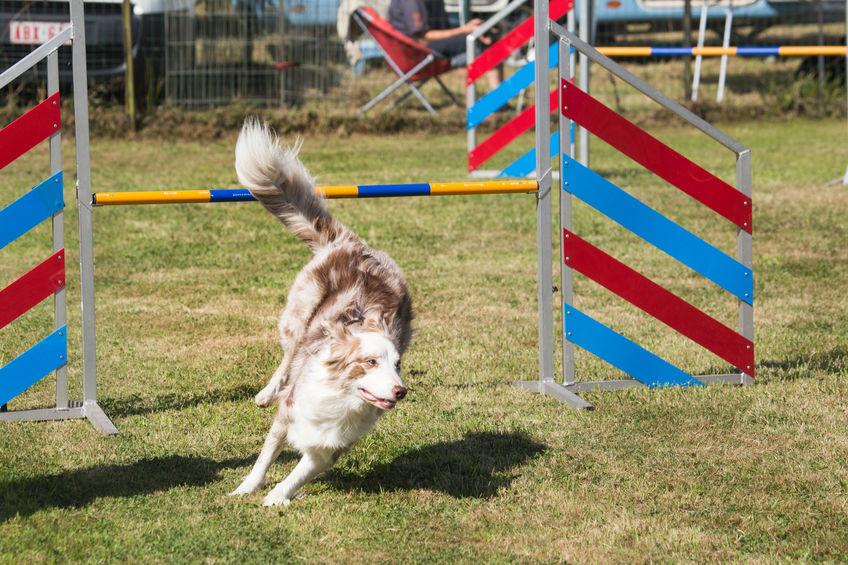 dog sports | Ultimate Pet Nutrition
