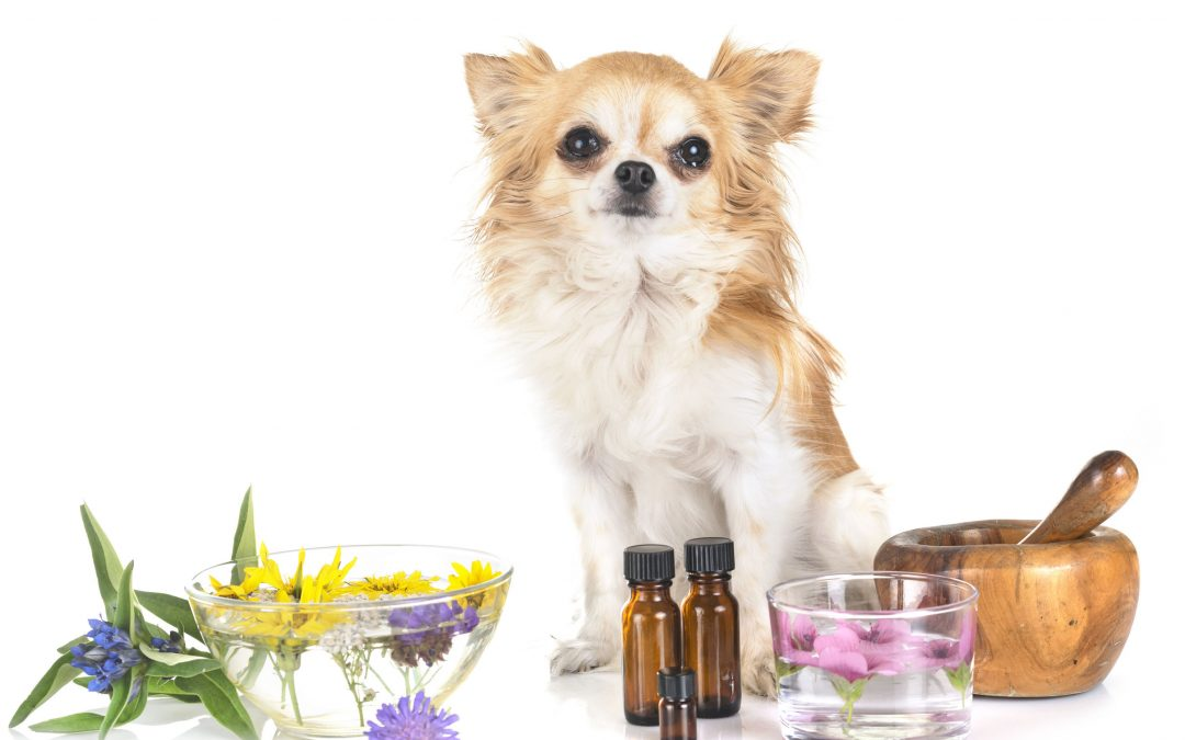 Essential Oils for Dogs – Harmful or Helpful?