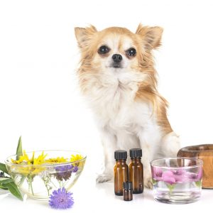 essential oils for dogs | Ultimate Pet Nutrition