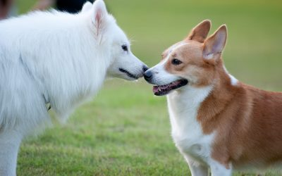 How to Introduce Dogs to Each Other