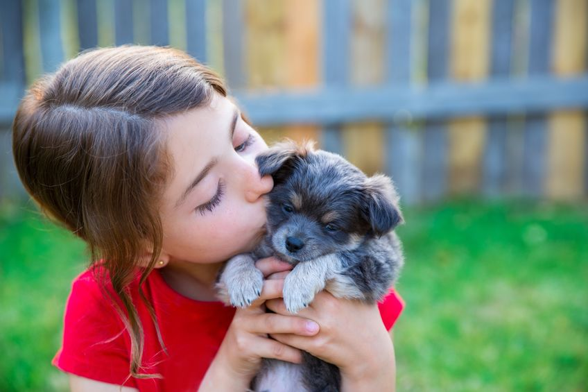 how to introduce dogs | Ultimate Pet Nutrition