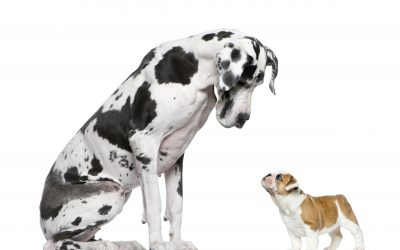 how to introduce a new puppy to an older dog | Ultimate Pet Nutrition