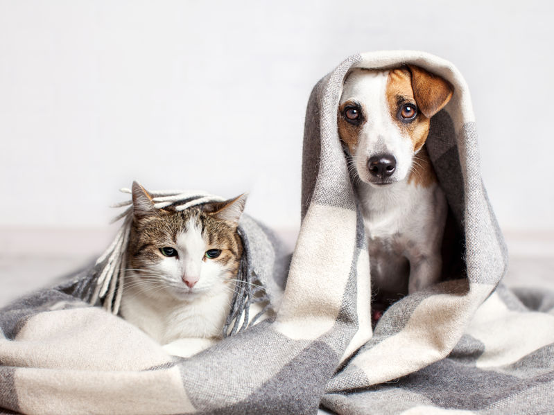 how to introduce cats to dogs | Ultimate Pet Nutrition