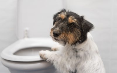 Why Does My Dog Drink Out Of The Toilet? (& how to break the habit)