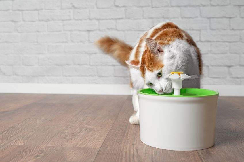cat drinking out of the toilet | Ultimate Pet Nutrition