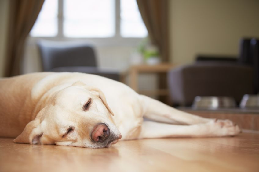 lethargic dog | Ultimate Pet Nutrition