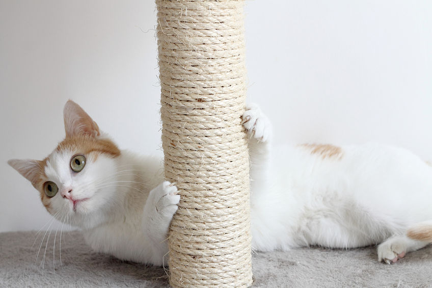 how to keep cats from scratching furniture | Ultimate Pet Nutrition