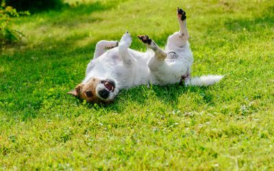 dog scratching | Ultimate Pet Nutrition