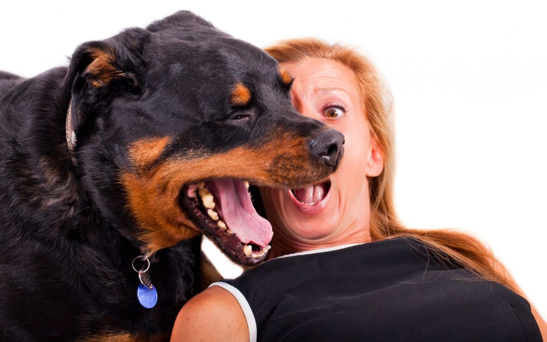 Help! My Dog's Breath Smells Like Fish: Help With Oral Issues