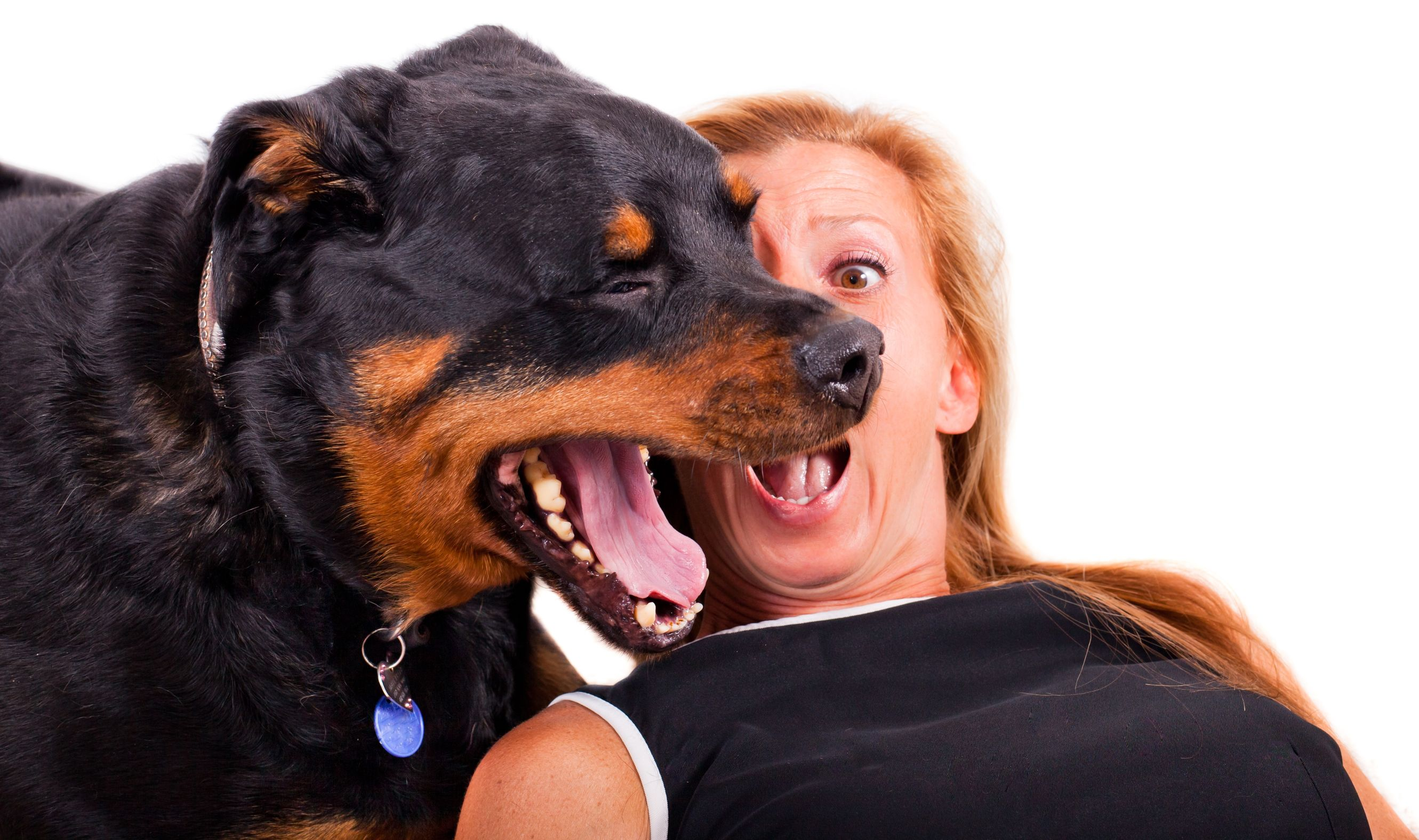 dog's breath smells like fish   Ultimate Pet Nutrition