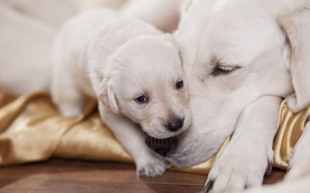 When Can Puppies Leave Their Mother – Do They Miss Their Mom?