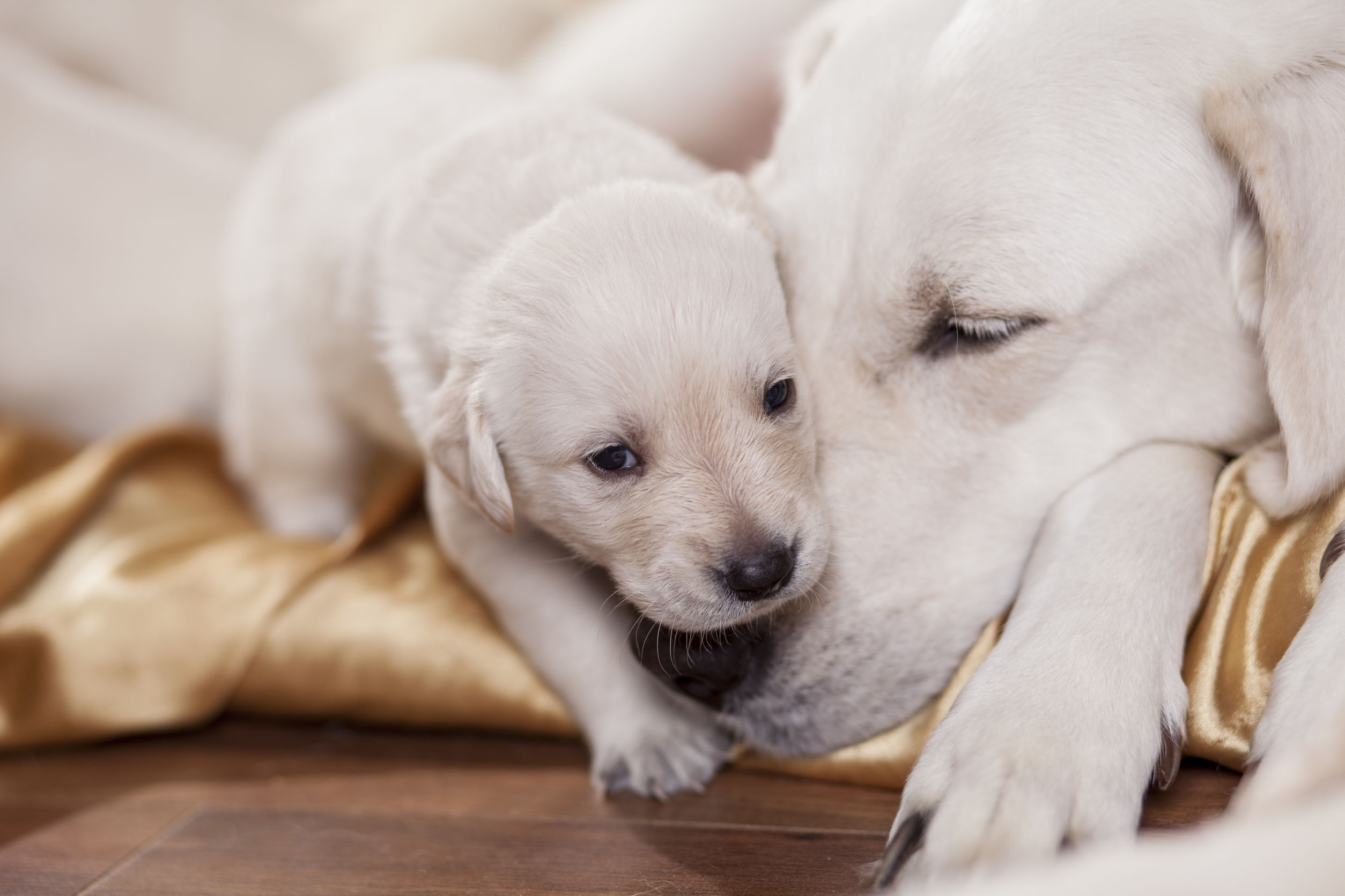when can puppies leave their mother   Ultimate Pet Nutrition