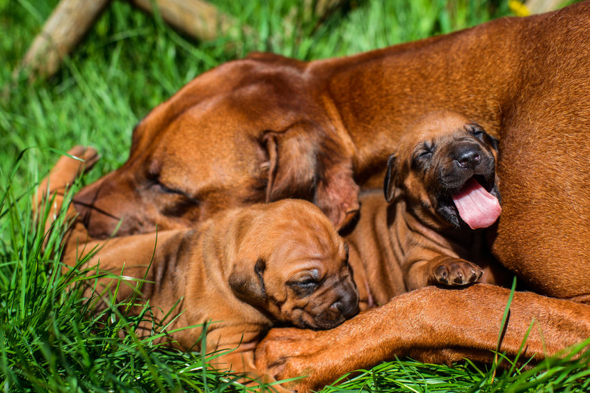 when can puppies leave their mother | Ultimate Pet Nutrition