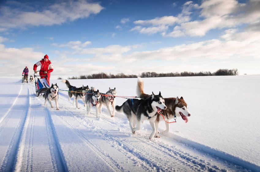 husky dog | Ultimate Pet Nutrition