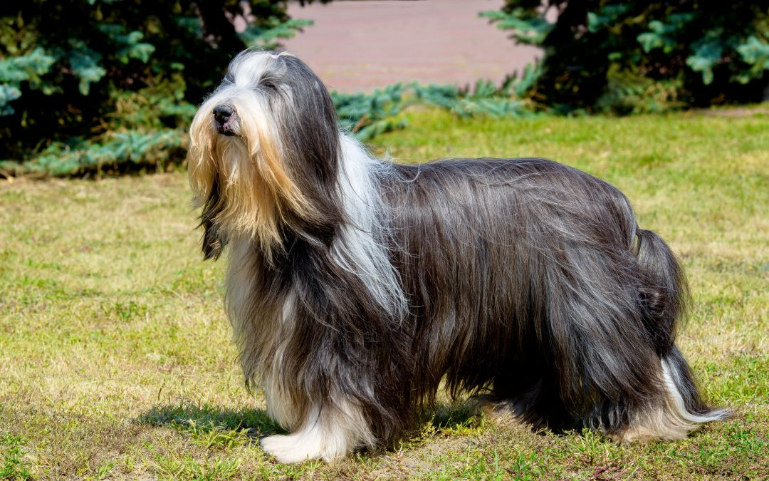 Dog Owners, Know Your Pet: Do Dogs Have Hair Or Fur?