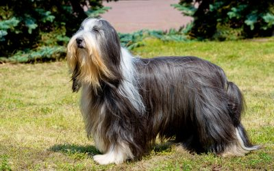 do dogs have hair or fur | Ultimate Pet Nutrition
