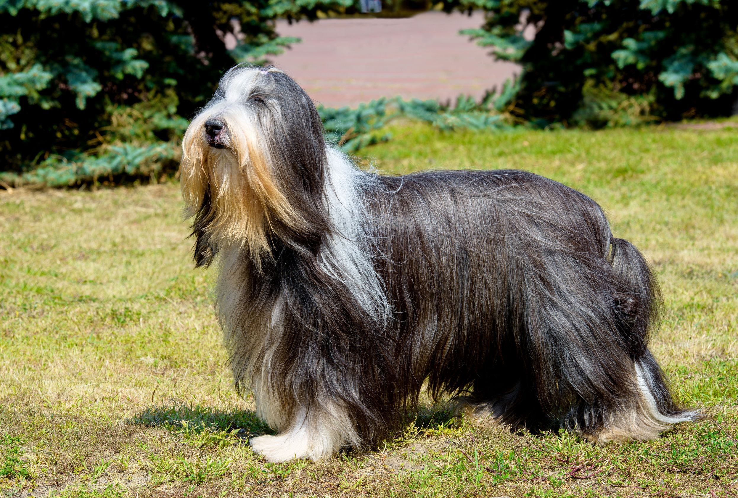 do dogs have hair or fur   Ultimate Pet Nutrition